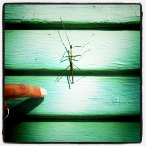 bug climbing
